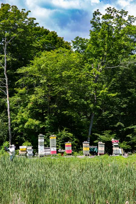 man made bee hives