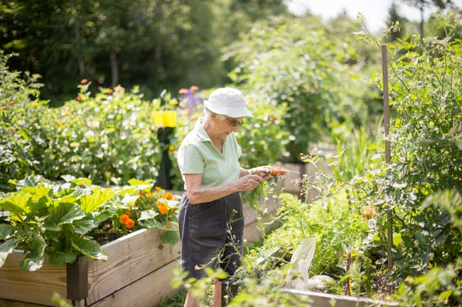 woman working in garden