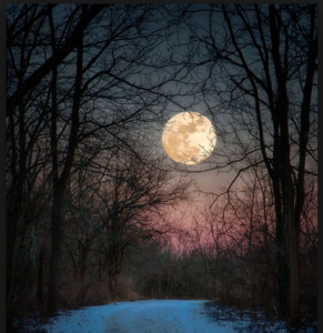 full moon in the woods
